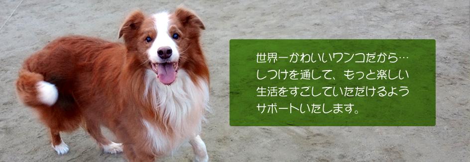 犬のしつけをサポートします。
