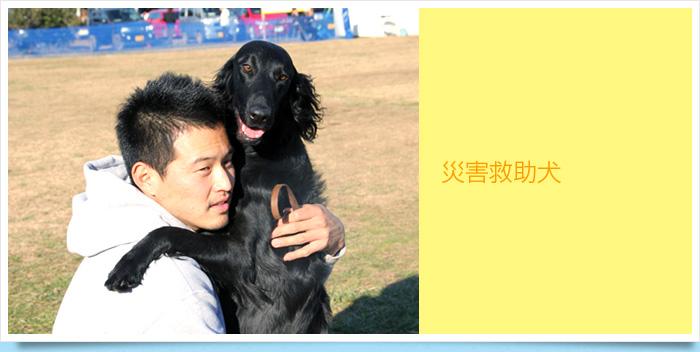 ドッグスクール|災害救助犬